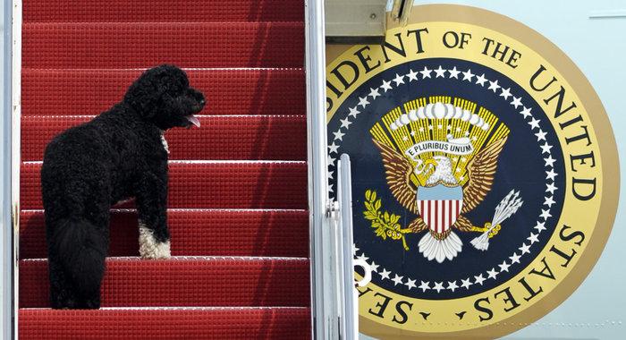 Ο σκύλος των Ομπάμα που κάνει «άνω κάτω» το Λευκό Οίκο - εικόνα 15