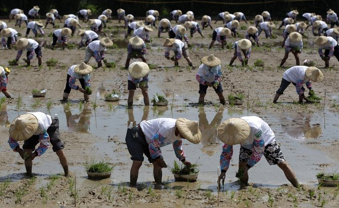 Στην Ταϊβάν το ρεκόρ φυτέματος 5.1 στρεμμάτων ρυζιού σε 16 λεπτά και 20 δευτερόλεπτα