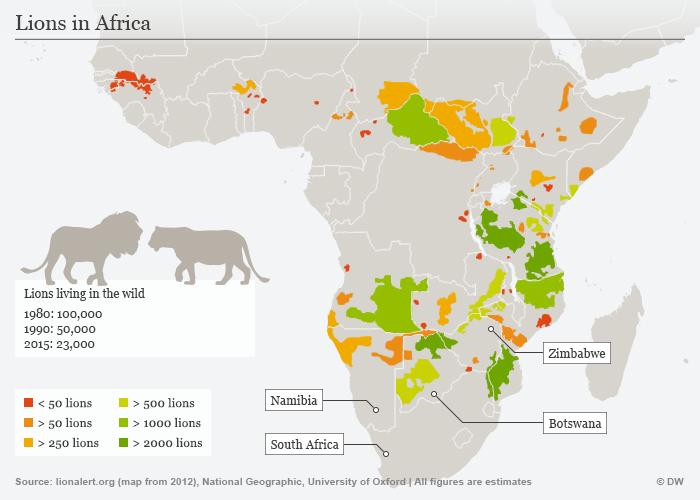 Απειλείται με εξαφάνιση ο βασιλιάς των ζώων, το λιοντάρι - εικόνα 4
