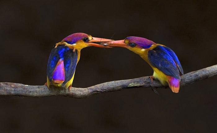 Οταν η φύση έχει κέφια: 22 εικόνες αποτυπώνουν την απόλυτη τελειότητα