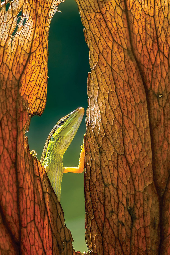 Dikky Oesin, Indonesia, Entry, Open, Nature & Wildlife / 2016 Sony World Photography Awards