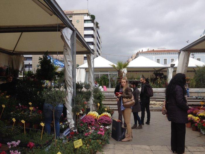 Χρυσάνθεμα, βασιλικά και δέντρα στην πιο φθηνή αγορά της πόλης - εικόνα 5