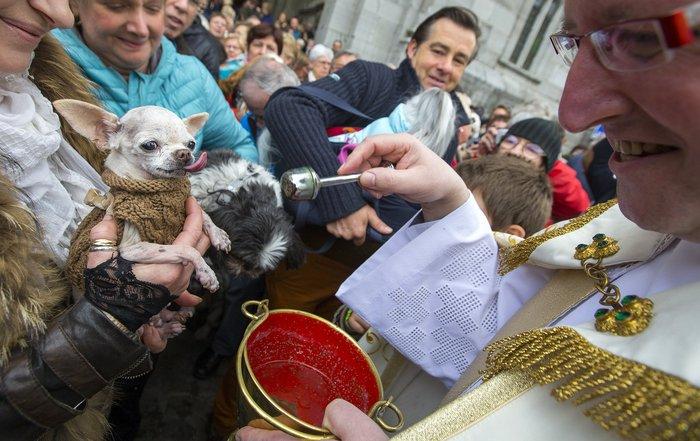 Παπάς ευλογεί τους...σκύλους των πιστών
