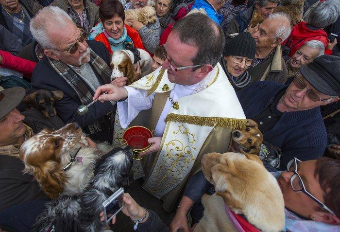 Παπάς ευλογεί τους...σκύλους των πιστών - εικόνα 3