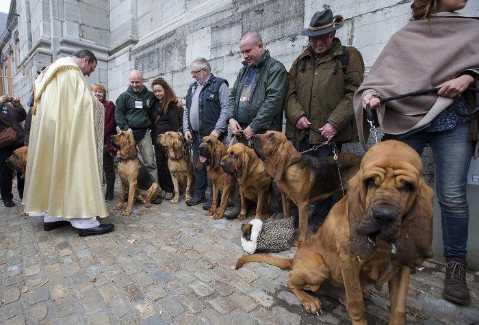 Παπάς ευλογεί τους...σκύλους των πιστών - εικόνα 4