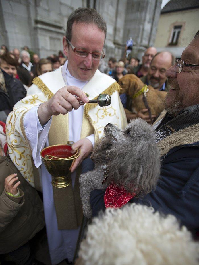 Παπάς ευλογεί τους...σκύλους των πιστών - εικόνα 5