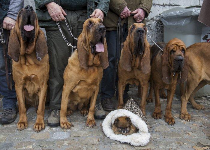 Παπάς ευλογεί τους...σκύλους των πιστών - εικόνα 7
