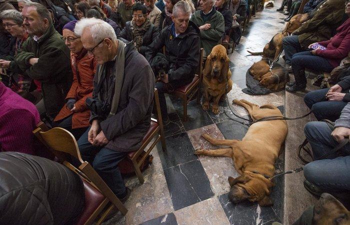 Παπάς ευλογεί τους...σκύλους των πιστών - εικόνα 8