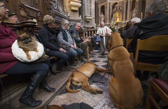 Παπάς ευλογεί τους...σκύλους των πιστών - εικόνα 9