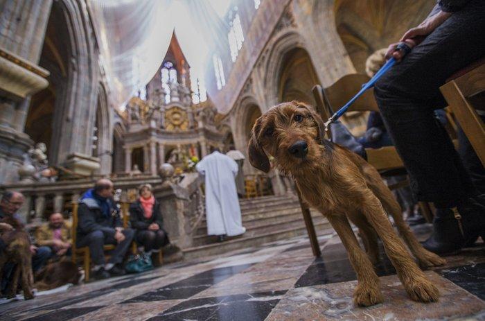 Παπάς ευλογεί τους...σκύλους των πιστών - εικόνα 11