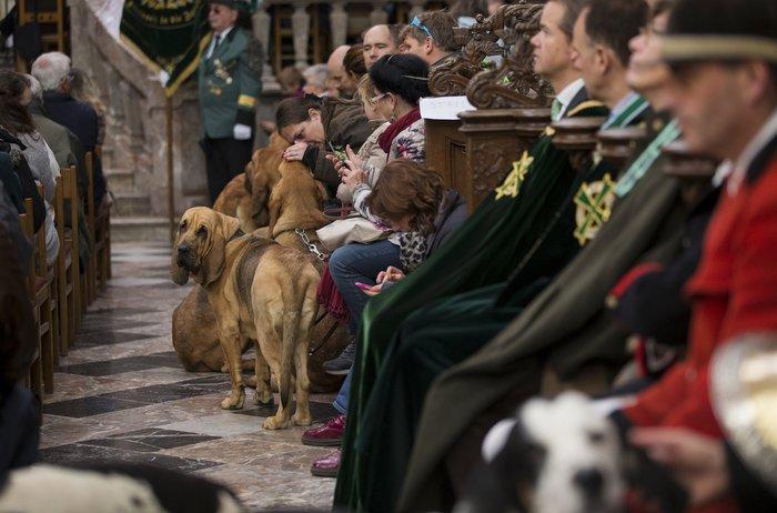 Παπάς ευλογεί τους...σκύλους των πιστών - εικόνα 12