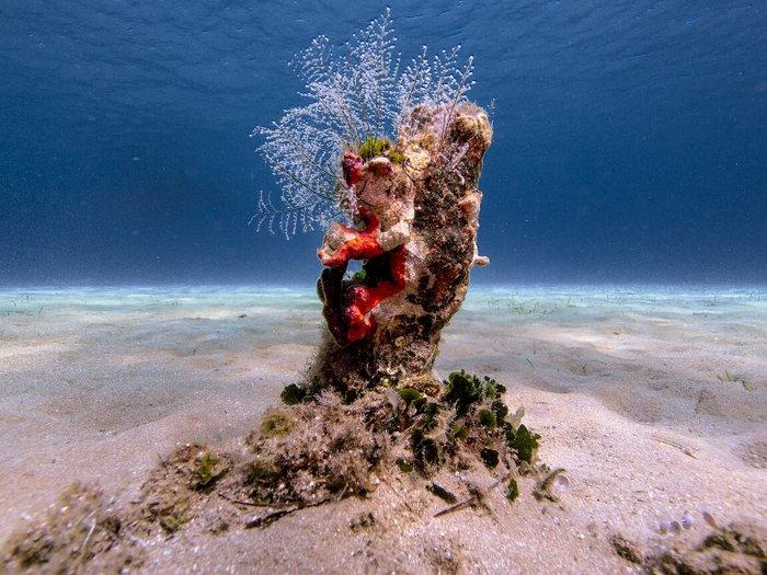 Η ομορφιά, η αξία και η μοναδικότητα του Ελληνικού υποβρύχιου τοπίου