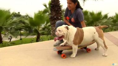 o-deksiotexnis-tou-skateboard-mpike-sta-guinness