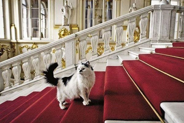 Οι γάτες του Ερμιτάζ προς υιοθεσία