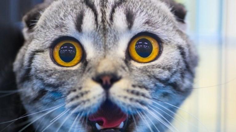 c1170c3ce43a Γιατί οι γάτες νιώθουν έναν απελπιστικό τρόμο όταν αντικρίζουν ...