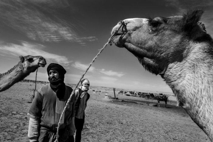 Luis de Vega/Αλγερία