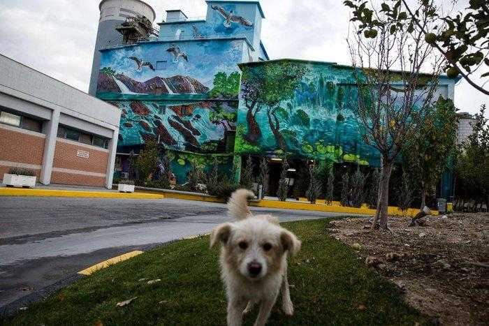 Τα εντυπωσιακά γκράφιτι στο εργοστάσιο της ΤΙΤΑΝ - εικόνα 5