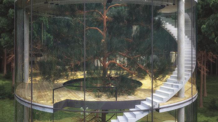 Το γυάλινο σπίτι χωρίς τοίχους, που τυλίγεται σε ένα τεράστιο δέντρο! - εικόνα 4