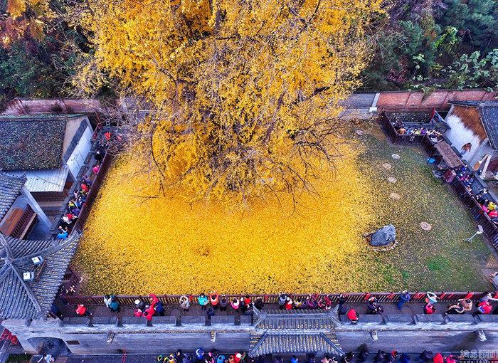 Ένα απίστευτο δέντρο 1.400 ετών προκαλεί το ενδιαφέρον όλου του πλανήτη - εικόνα 3