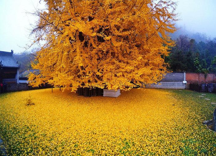 Ένα απίστευτο δέντρο 1.400 ετών προκαλεί το ενδιαφέρον όλου του πλανήτη - εικόνα 5