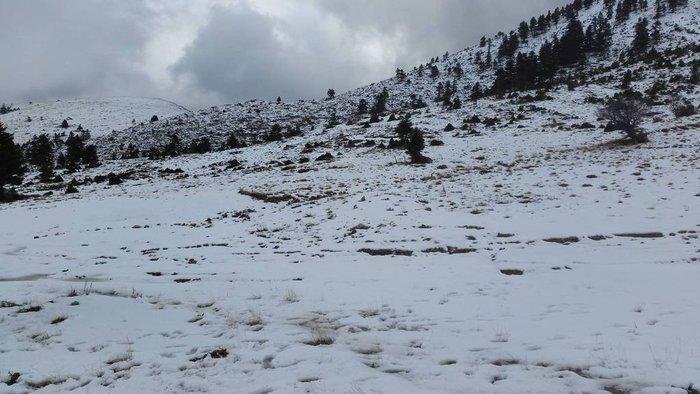 Επεσαν τα πρώτα χιόνια στα Καλάβρυτα: Δείτε τις εικόνες - εικόνα 3