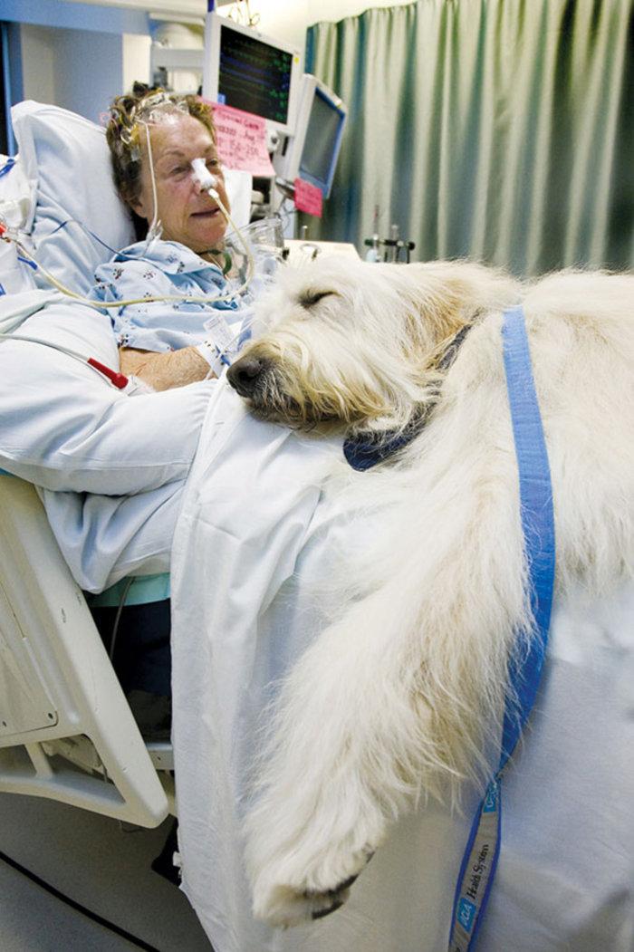Νοσοκομείο στον Καναδά καθιερώνει επισκεπτήριo ζώων στα αφεντικά τους