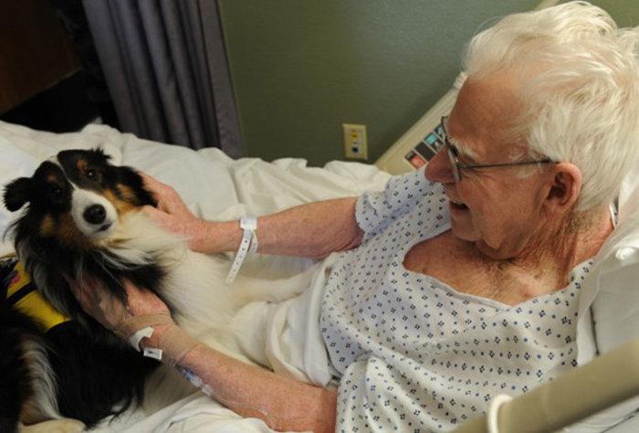 Νοσοκομείο στον Καναδά καθιερώνει επισκεπτήριo ζώων στα αφεντικά τους - εικόνα 4