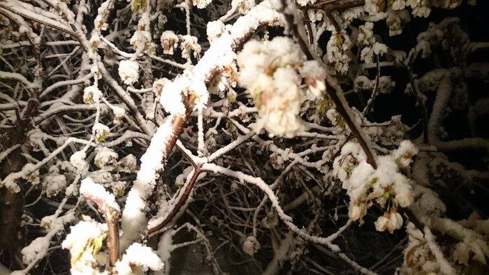 «Ντύθηκαν» στα λευκά τα Γρεβενά λίγο πριν το Πάσχα - εικόνα 5