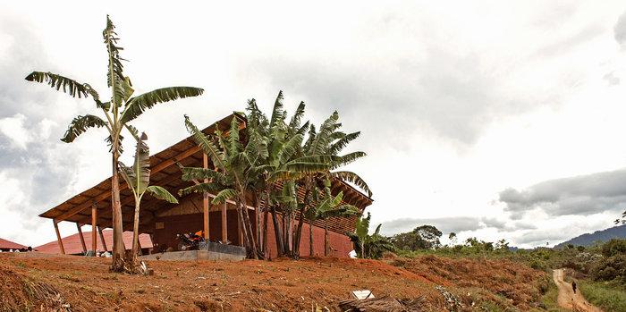 Μεταμορφώνοντας τη ζούγκλα του Αμαζόνιου - εικόνα 4