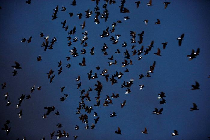 Ο ουρανός του Μπρούκλιν φωτίστηκε από... περιστέρια - εικόνα 7