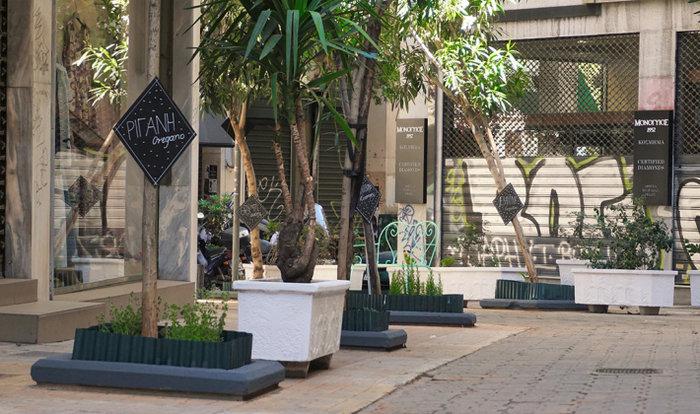 Ένας μικρός μεσογειακός κήπος στο κέντρο της Αθήνας - εικόνα 13