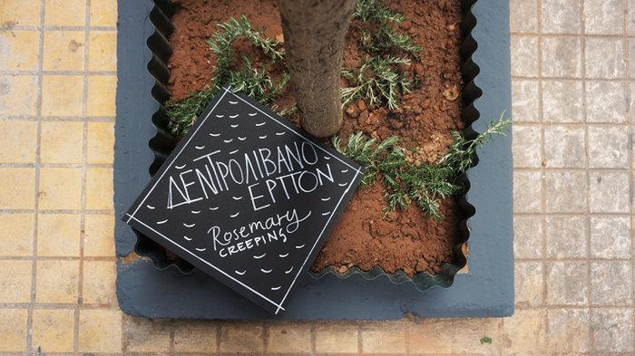 Ένας μικρός μεσογειακός κήπος στο κέντρο της Αθήνας - εικόνα 11