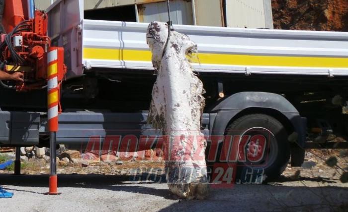 Ηρθε αντιμέτωπος με καρχαρία ενώ κολυμπούσε στη Σύρο! (φωτό) - εικόνα 2