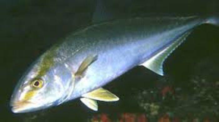Στην Πρέβεζα βγήκαν τα ψάρια στη στεριά
