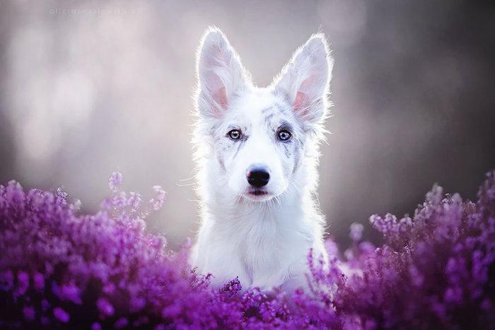 12 ονειρικά πορτρέτα σκύλων από μια φωτογράφο που λατρεύει τα ζώα