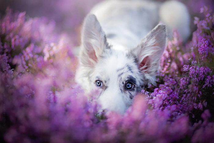 12 ονειρικά πορτρέτα σκύλων από μια φωτογράφο που λατρεύει τα ζώα - εικόνα 2