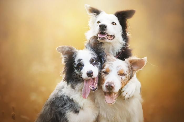 12 ονειρικά πορτρέτα σκύλων από μια φωτογράφο που λατρεύει τα ζώα - εικόνα 3