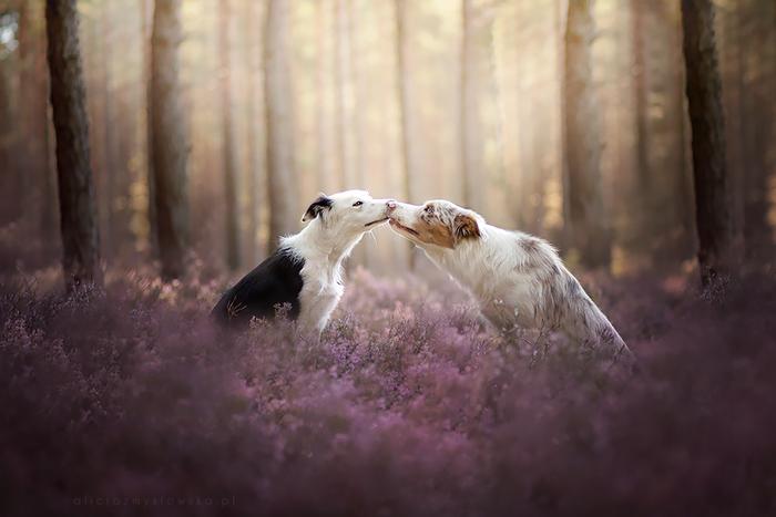 12 ονειρικά πορτρέτα σκύλων από μια φωτογράφο που λατρεύει τα ζώα - εικόνα 4