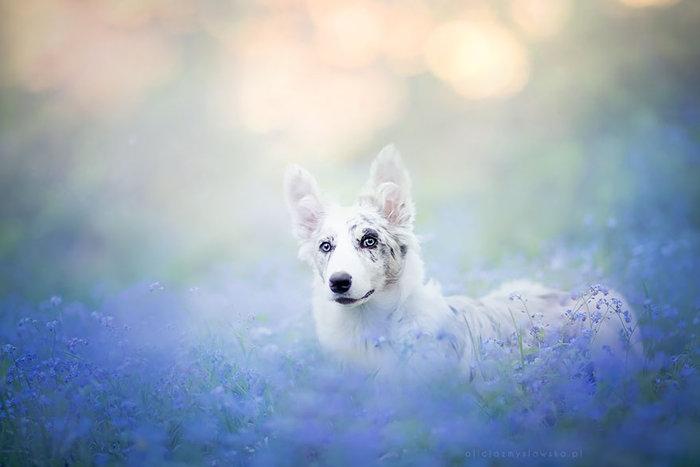12 ονειρικά πορτρέτα σκύλων από μια φωτογράφο που λατρεύει τα ζώα - εικόνα 5