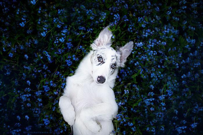 12 ονειρικά πορτρέτα σκύλων από μια φωτογράφο που λατρεύει τα ζώα - εικόνα 6
