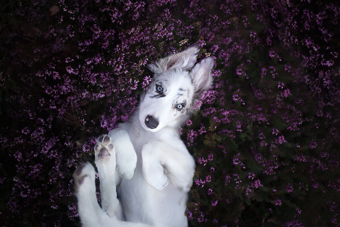 12 ονειρικά πορτρέτα σκύλων από μια φωτογράφο που λατρεύει τα ζώα - εικόνα 8