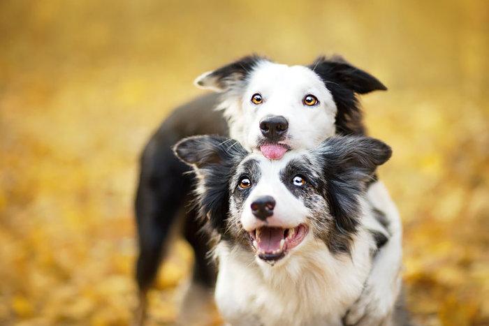 12 ονειρικά πορτρέτα σκύλων από μια φωτογράφο που λατρεύει τα ζώα - εικόνα 9