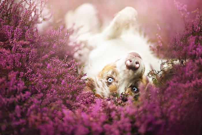 12 ονειρικά πορτρέτα σκύλων από μια φωτογράφο που λατρεύει τα ζώα - εικόνα 10