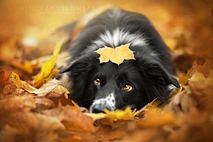 12 ονειρικά πορτρέτα σκύλων από μια φωτογράφο που λατρεύει τα ζώα - εικόνα 11