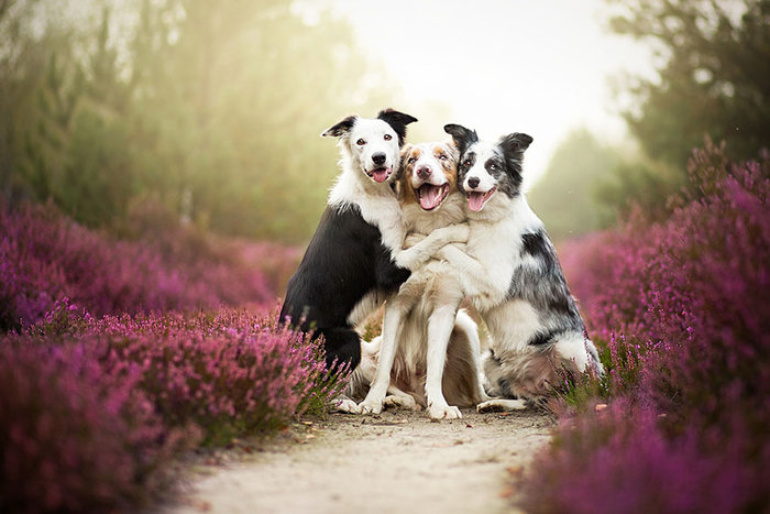 12 ονειρικά πορτρέτα σκύλων από μια φωτογράφο που λατρεύει τα ζώα - εικόνα 12