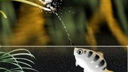 Κι όμως, τα ψάρια αναγνωρίζουν τα ανθρώπινα πρόσωπα!