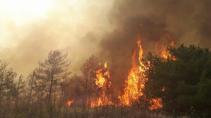 Συνεχίζεται η μάχη με τις φλόγες στη Ρόδο - Φωτο & Βίντεο - εικόνα 6
