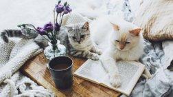 Cliff and Neel: Το πιο ωραίο γατο-προφίλ στο Instagram