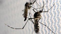 Επιβεβαιώθηκαν ακόμη 41 κρούσματα του ιού Ζίκα στη Σιγκαπούρη