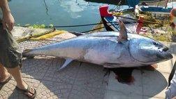 Καλή ψαριά: Έπιασε τόνο 220 κιλών στην Κεφαλονιά